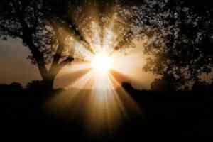 reiki healing sunrays through tree at sunrise